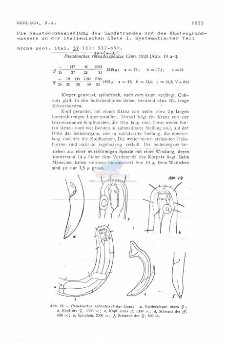 Pseudonchus gerlachi