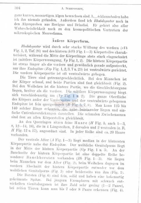 Epsilonema cygnoides