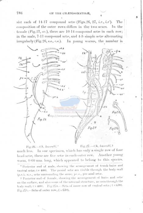 Draconema haswelli