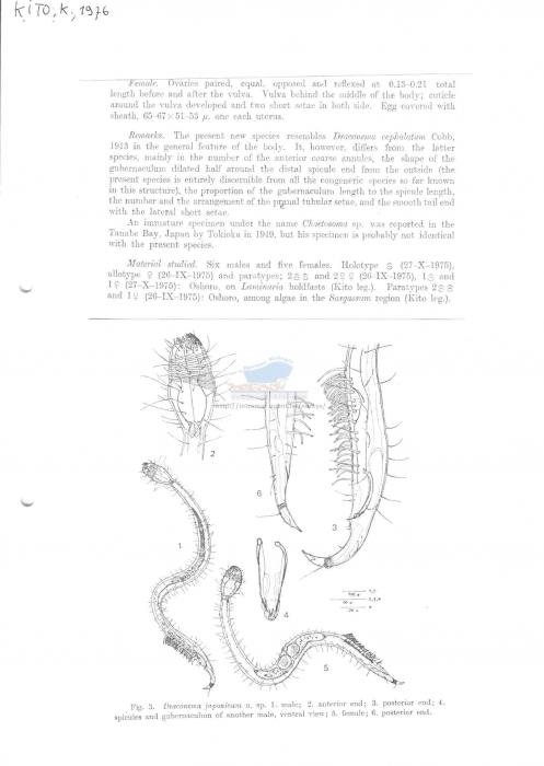 Draconema japonicum
