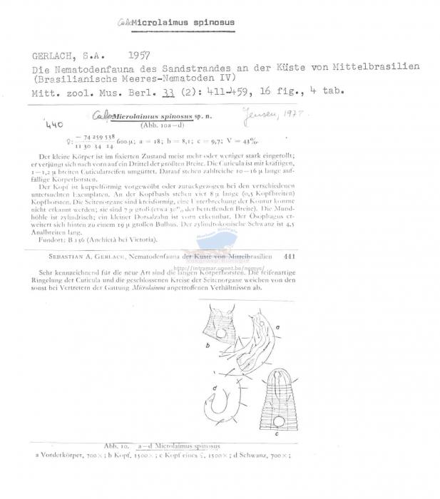 Calomicrolaimus spinosus