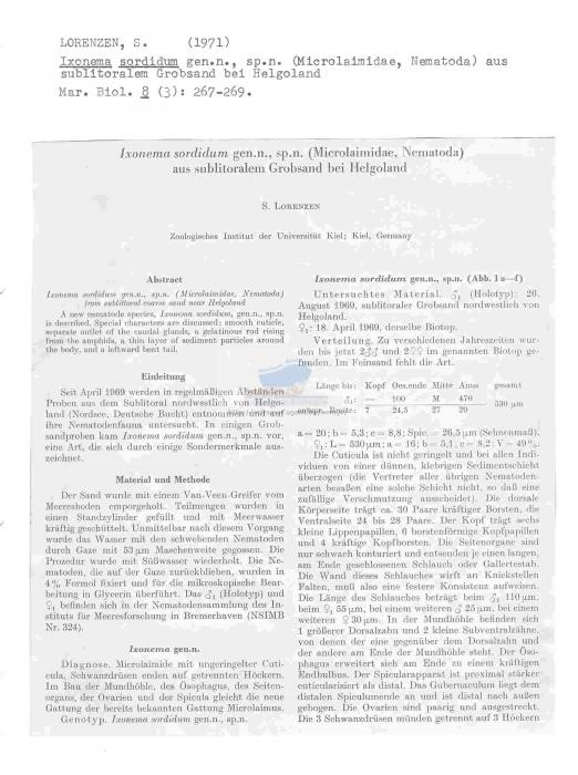 Ixonema sordidum