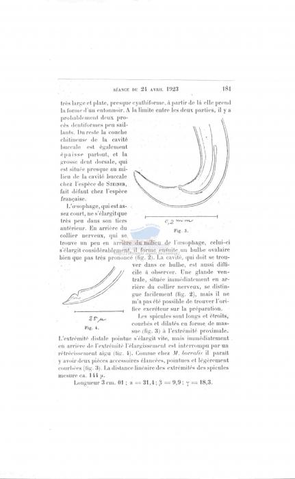 Microlaimus inermis