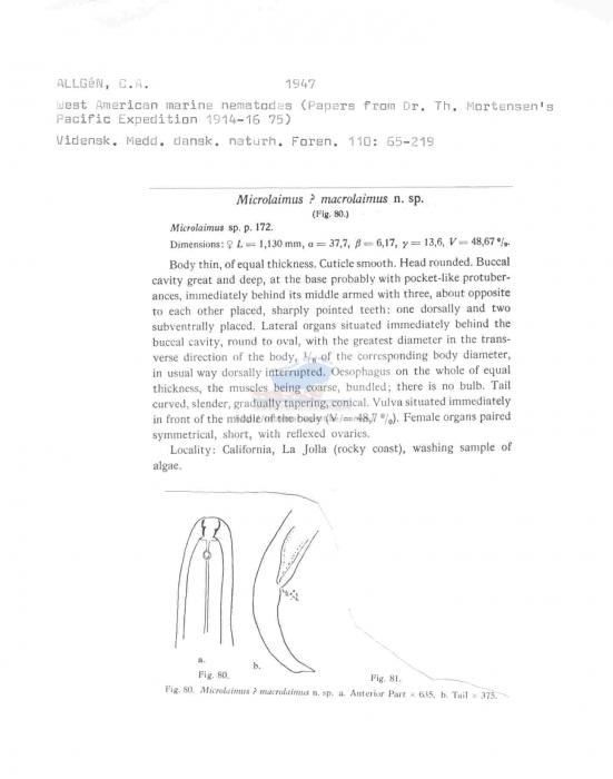 Microlaimus macrolaimus