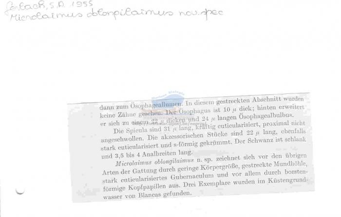 Microlaimus oblongilaimus