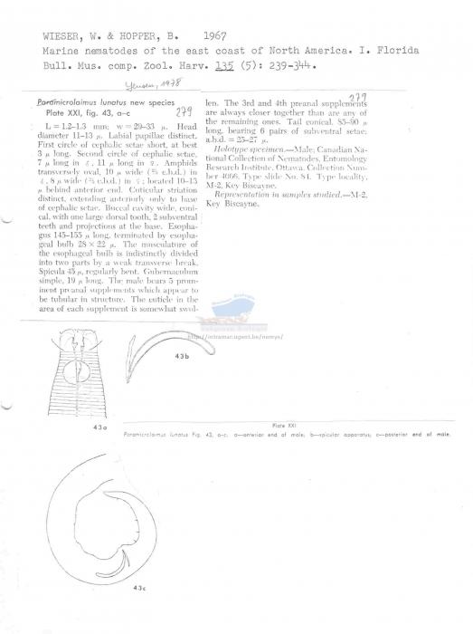 Microlaimus lunatus