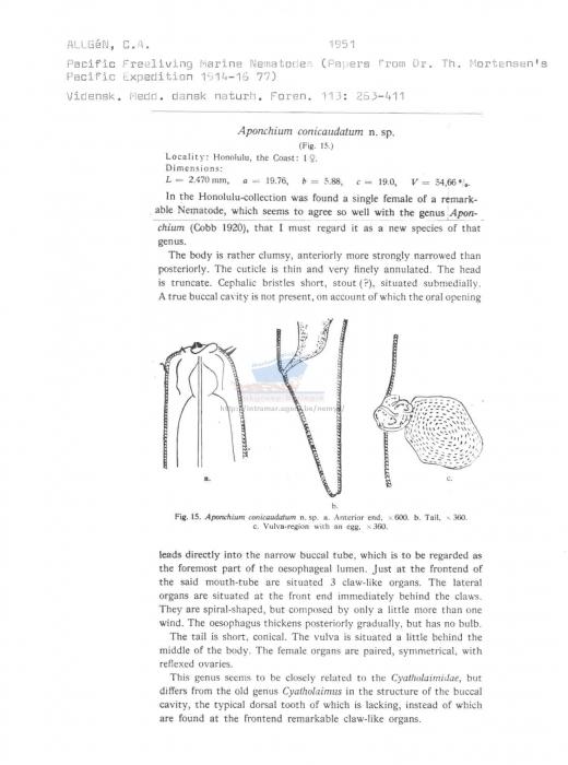 Aponchium conicaudatum