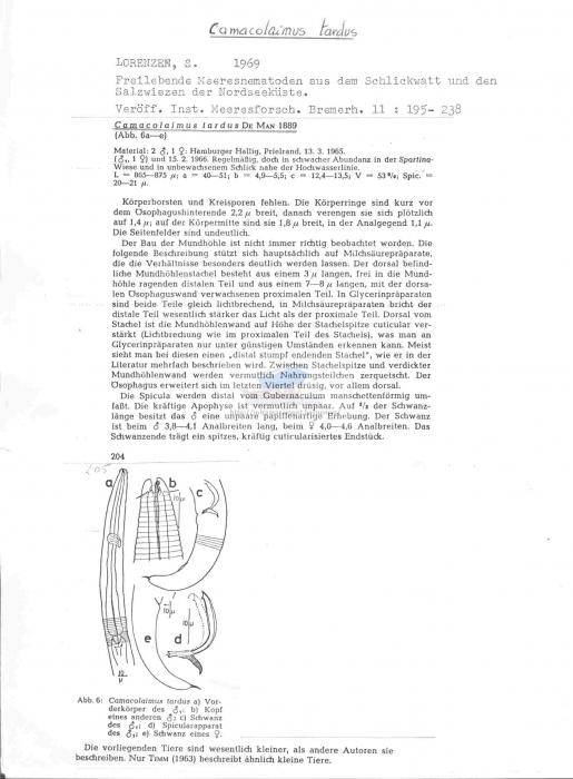 Camacolaimus tardus