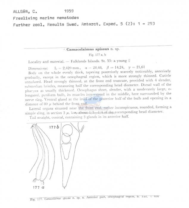 Camacolaimus spissus