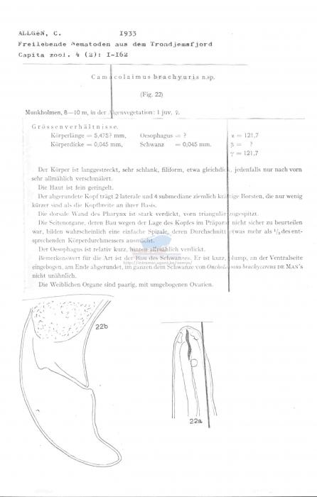 Camacolaimus brachyuris