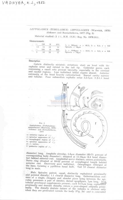 Leptolaimus ampullaceus