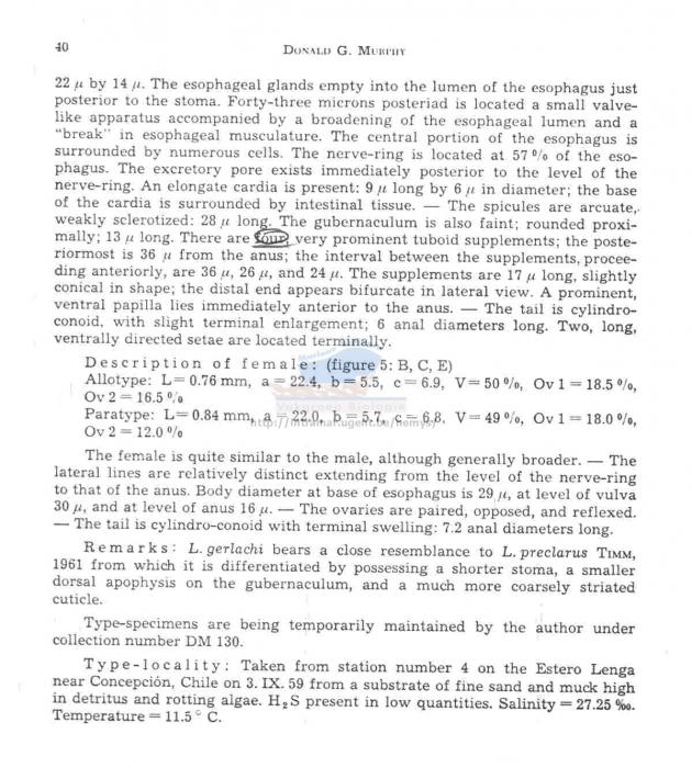 Leptolaimus gerlachi