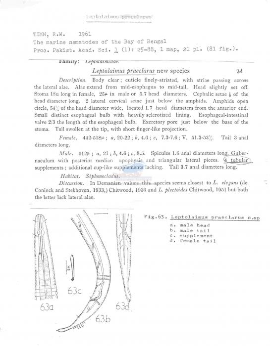 Leptolaimus praeclarus