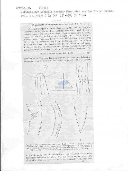 Stephanolaimus elegans