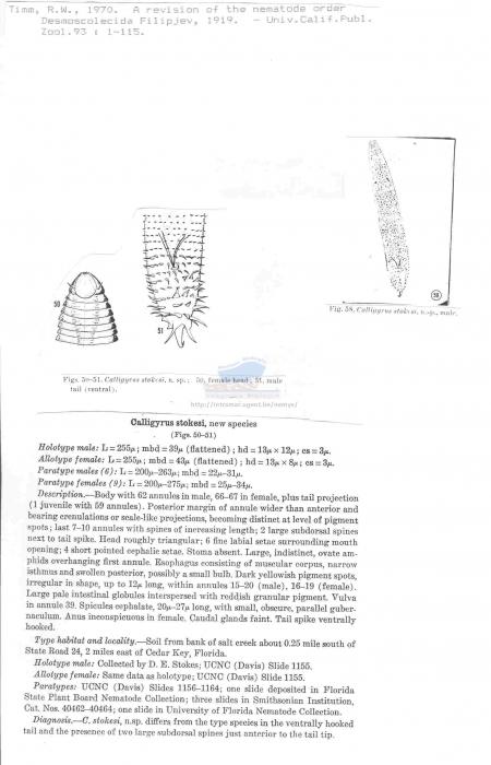 Calligyrus stokesi
