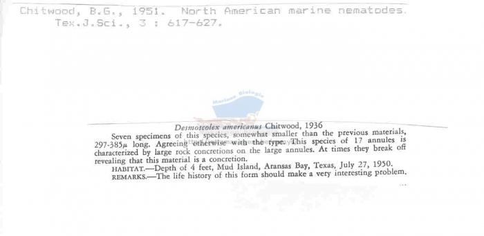 Desmoscolex americanus
