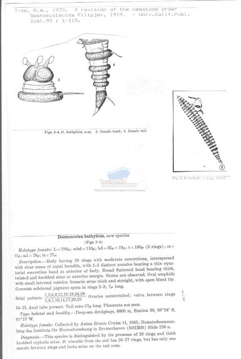 Desmoscolex bathybius
