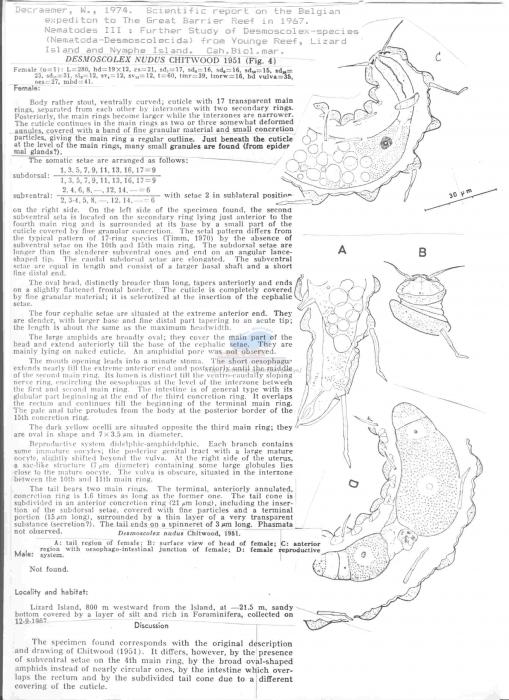 Desmoscolex nudus