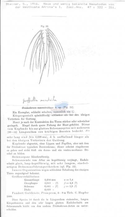 Greeffiella macrotricha