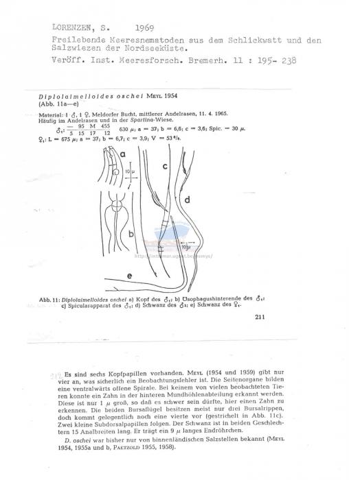 Diplolaimelloides oschei