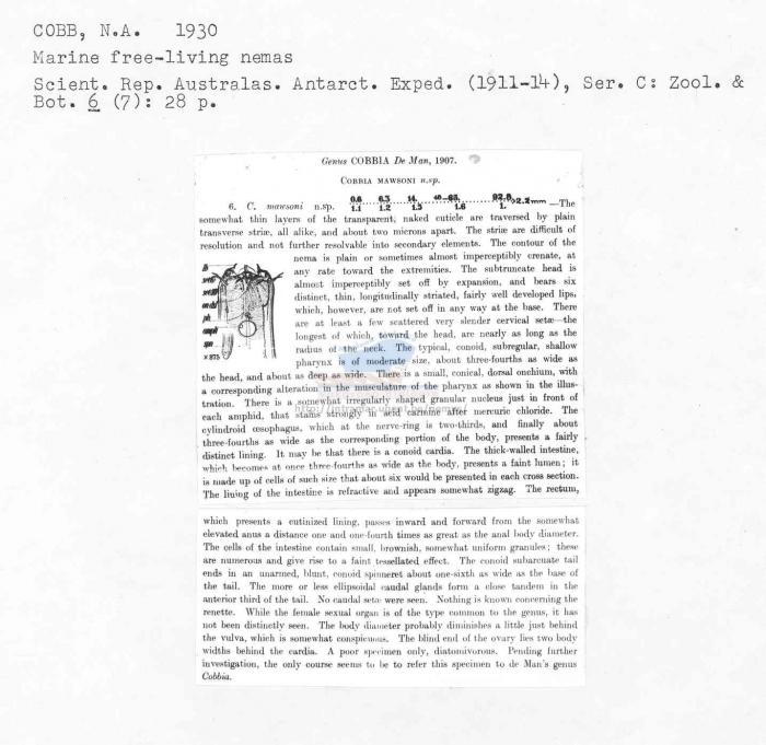 Cobbia mawsoni