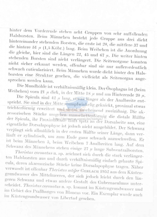 Metadesmolaimus coronatus