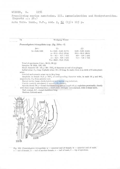 Promonhystera tricuspidata