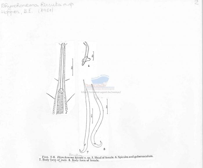 Rhynchonema hirsutum