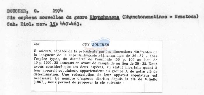 Rhynchonema wieseri