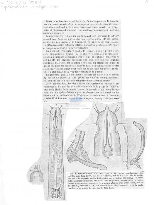 Siphonolaimus niger