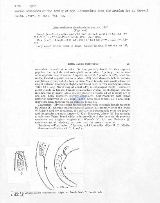 Eleutherolaimus obtusicaudatus