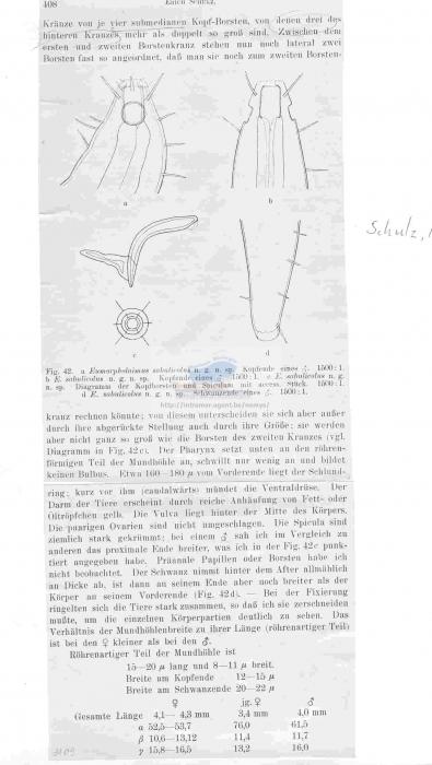 Eumorpholaimus sabulicolus