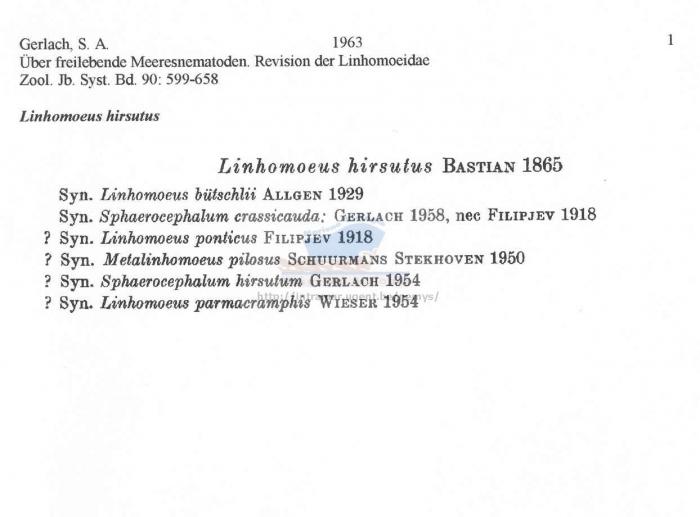 Linhomoeus hirsutus