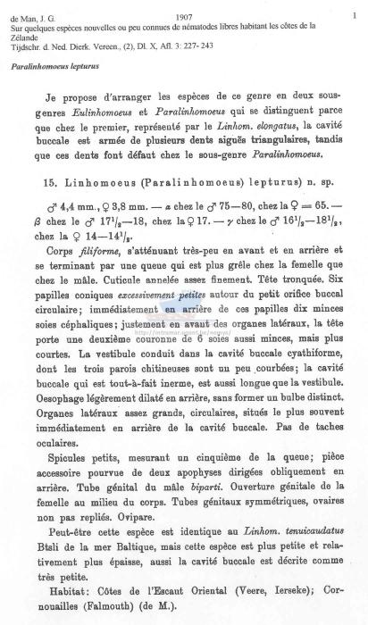 Paralinhomoeus lepturus