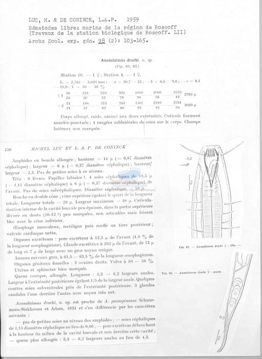 Axonolaimus drachi