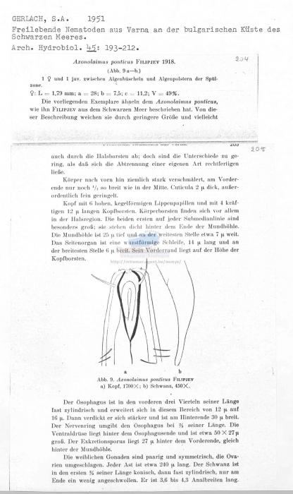Axonolaimus ponticus