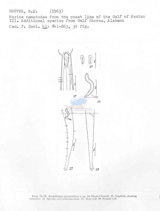 Axonolaimus paraponticus