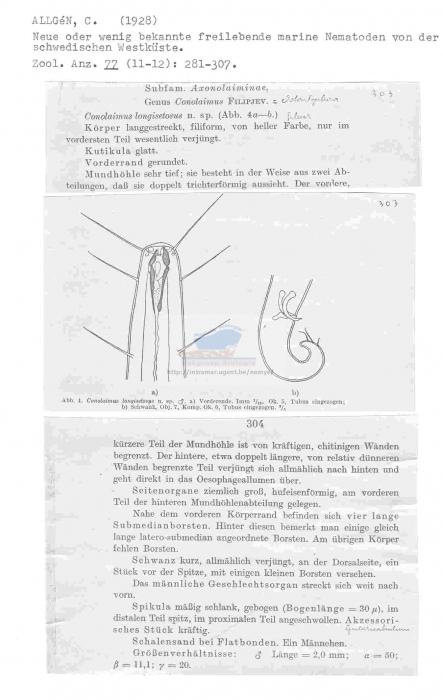 Odontophora longisetosa