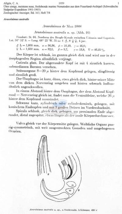Araeolaimus australis