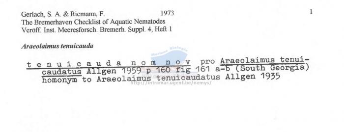Araeolaimus tenuicauda
