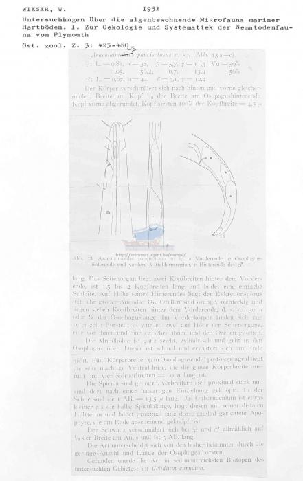 Araeolaimus paucisetosus