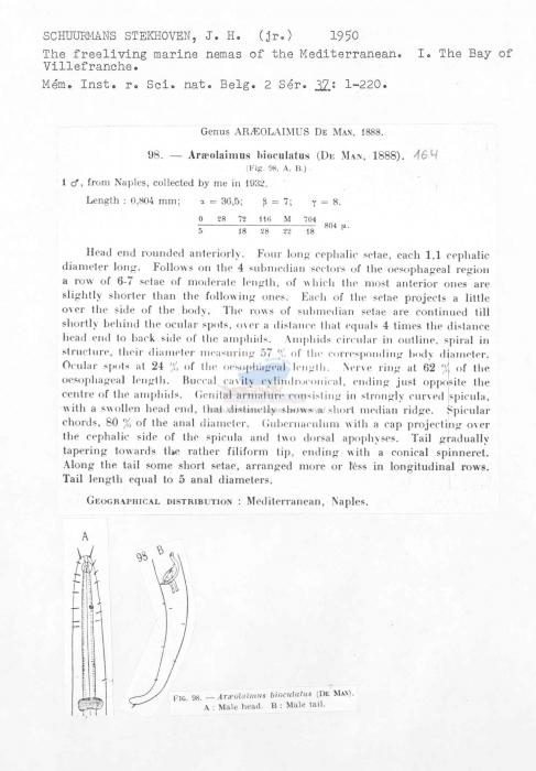 Araeolaimus bioculatus