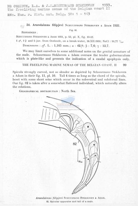 Araeolaimus filipjevi
