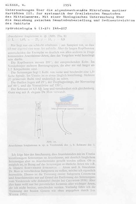Araeolaimus longisetosus