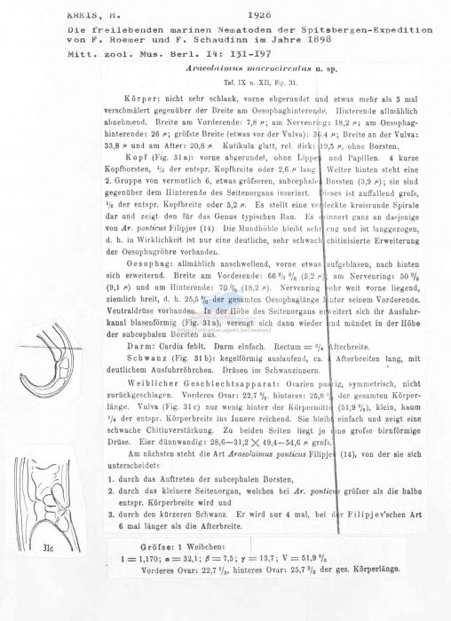 Araeolaimus macrocirculus