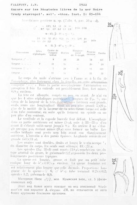 Araeolaimus ponticus
