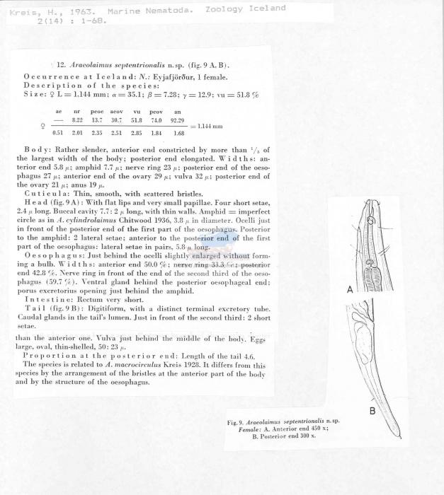 Araeolaimus septentrionalis