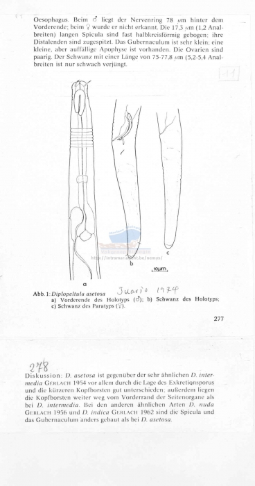 Diplopeltula asetosa
