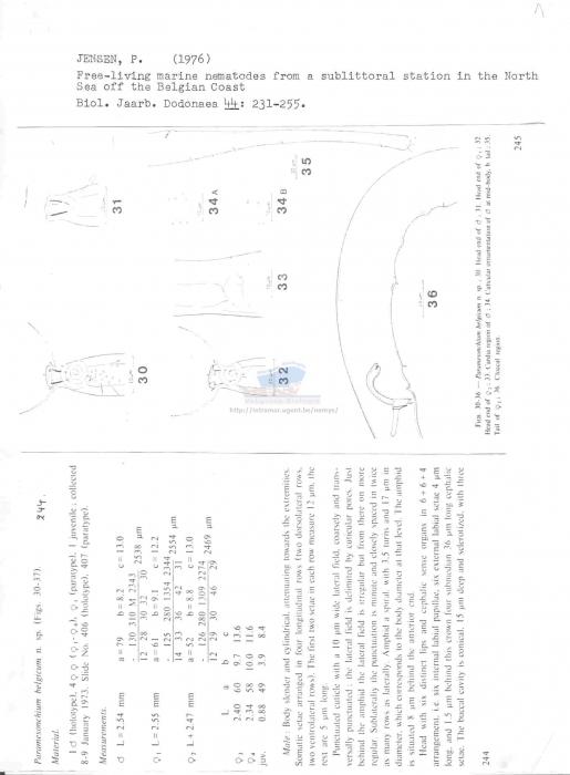 Paramesonchium belgicum
