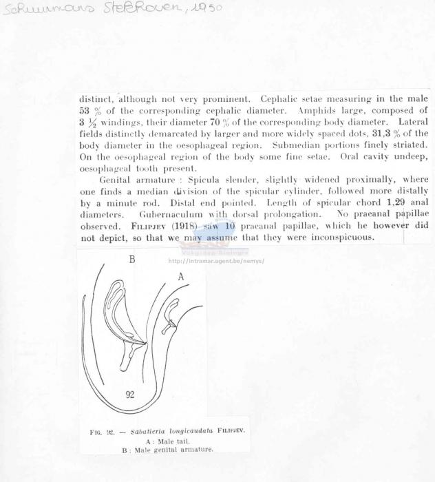 Sabatieria longicaudata